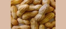 Natural Source of Peanut Shell