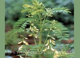 Natural Source of Astragalus