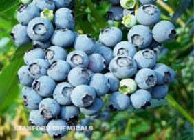 Natural Source of Blueberry