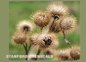 Natural Source of Burdock Seed