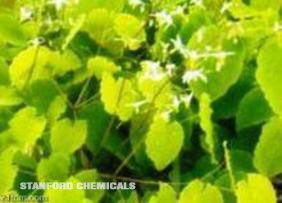 Natural Source of Epimedium