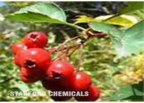 Natural Source of Hawthorn Berry