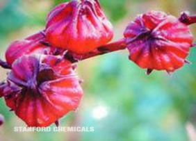 Natural Source of Hibiscus Flower