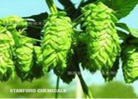 Natural Source of Hops Flower
