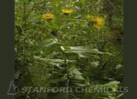 Natural Source of Inula Racemosa