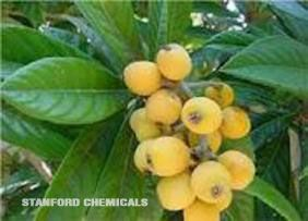 Natural Source of Loquat Leaf