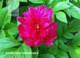 Natural Source of Paeonia Lactiflora Pall