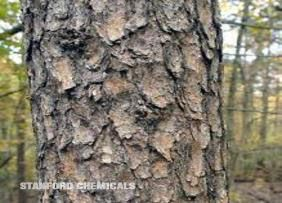 Natural Source of Pine Bark