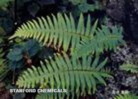 Natural Source of Polypodium