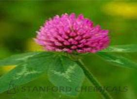 Natural Source of Red Clover