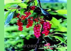 Natural Source of Schisandra Berry