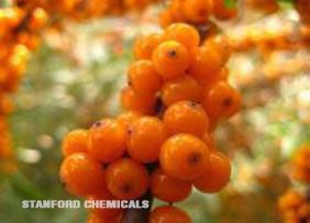 Natural Source of Sea Buckthorn