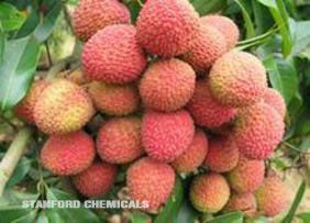 Natural Source of Semen Litchi