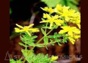 Natural Source of St. John's Wort